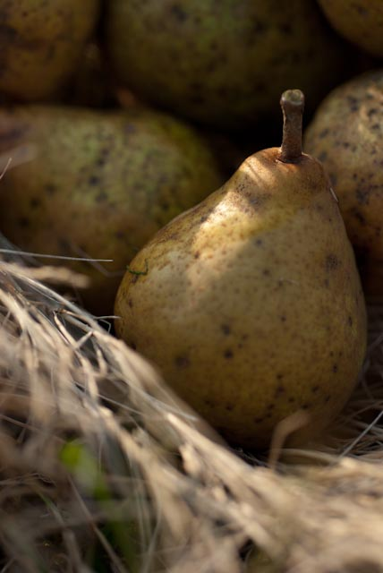 pears in the grass photo Heather Ross