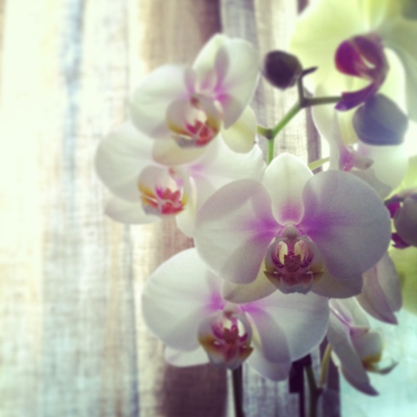 orchids Heather Ross