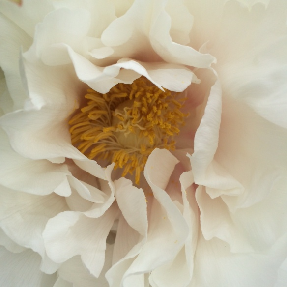 peony petal perfection Heather Ross
